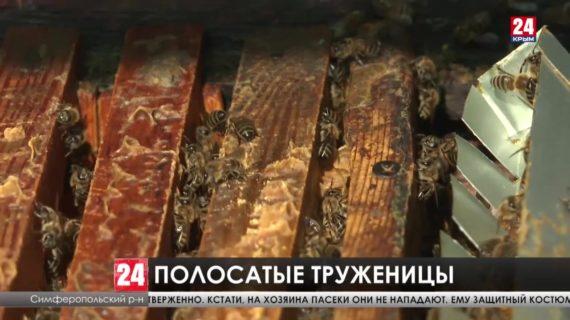 Пчеловоды Крыма произвели более тысячи тонн мёда