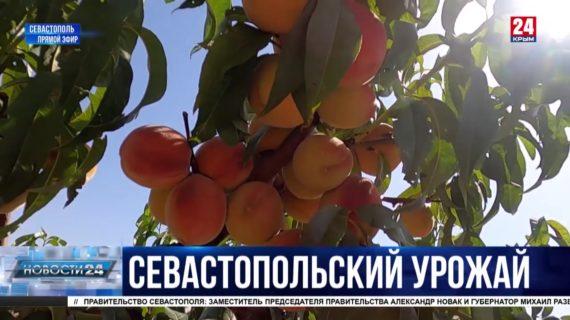 Новости Севастополя. Выпуск от 06.08.21