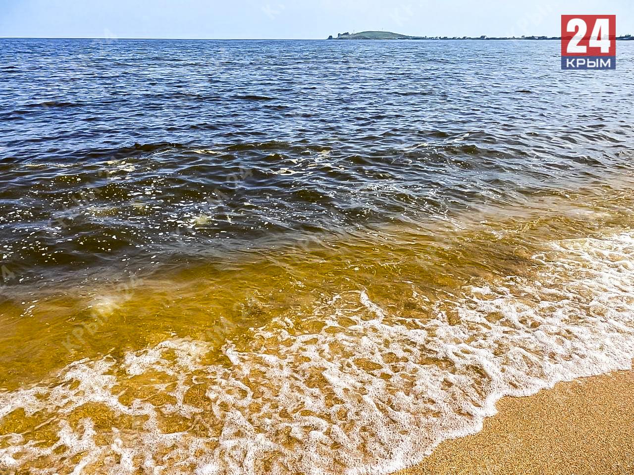 На востоке Крыма берег завалило мёртвыми медузами и дельфинами. Виновата жара. ФОТО, ВИДЕО
