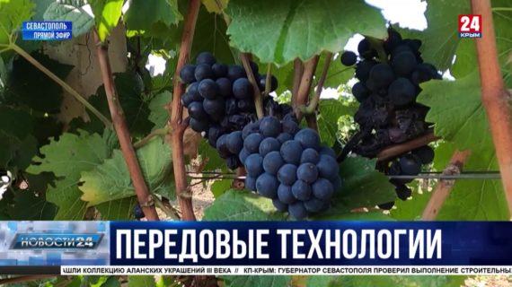 Новости Севастополя. Выпуск от 15.09.21