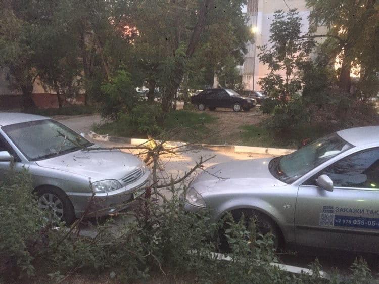 В Симферополе сухая ветка упала на машины