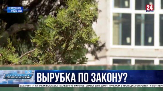 Законность вырубки деревьев в районе Казачьей бухты проверят