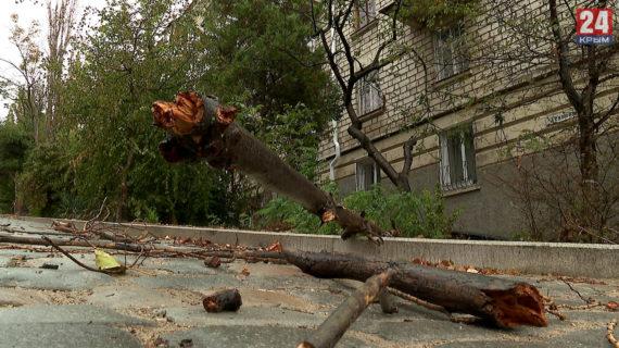 В Севастополе ветер повалил деревья и оборвал линии электропередач