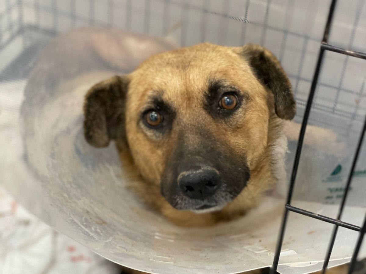 #БАРОНЖИВИ. В Севастополе нашли собаку, которую кто-то хотел разрезать пополам. ФОТО 18+