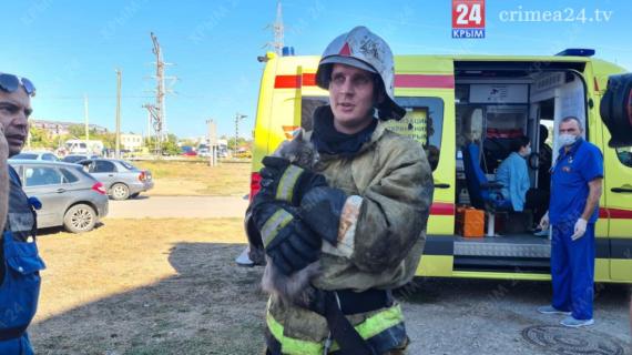 Пожарные спасли кота из горящего дома в Евпатории