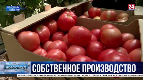 В севастопольских теплицах начали сбор томатов: какой урожай в этом году и как поддержат предпринимателей?