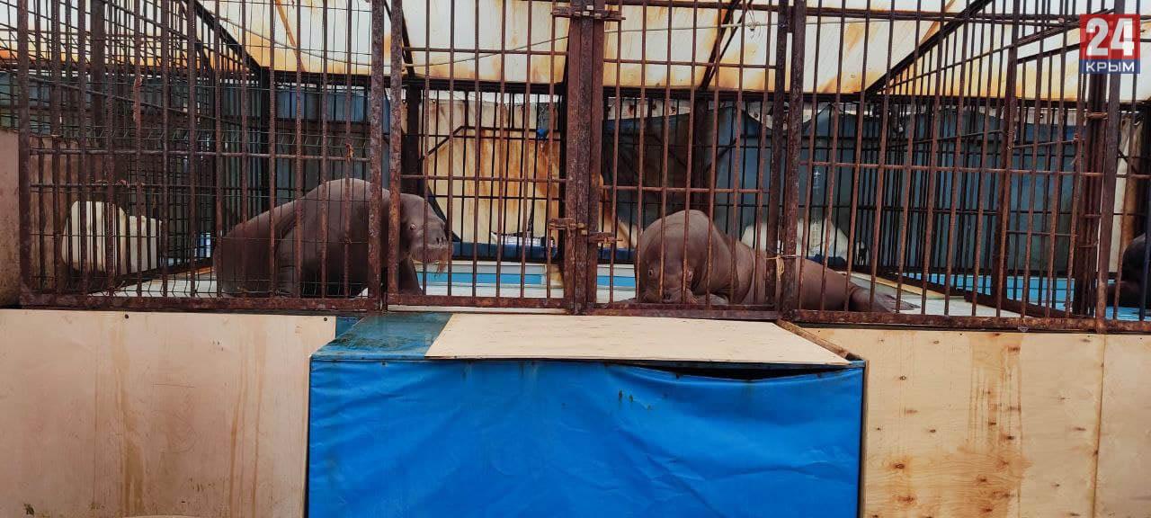 Пять краснокнижных моржей перевозят из Крыма в Москву