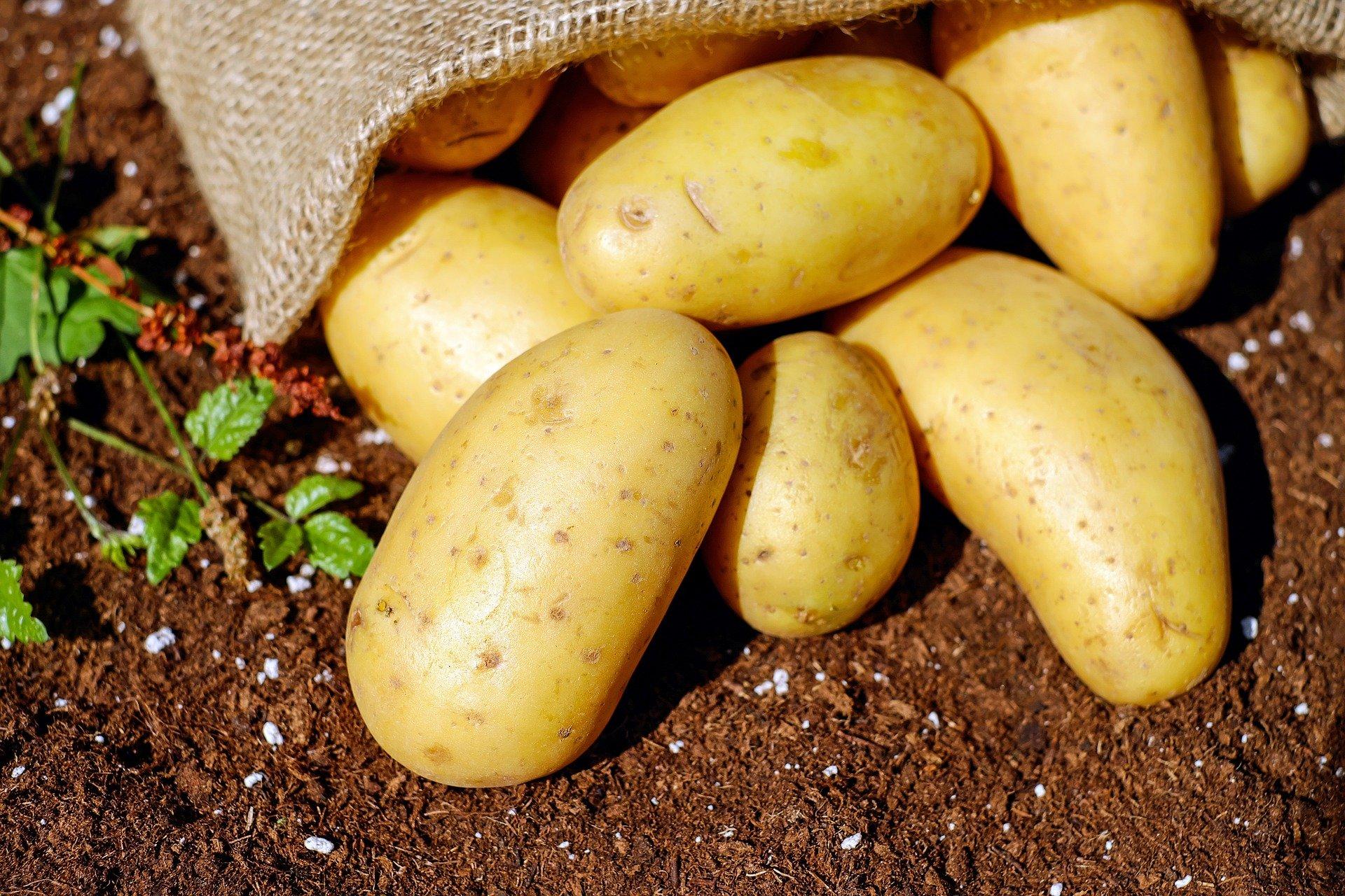 В Минсельхозе Крыма рассказали, сколько будет стоить картофель