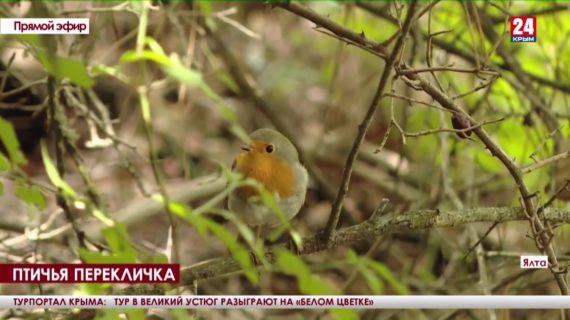 Пернатые в цифрах. В Ялтинском заповеднике проводят осенний учёт птиц