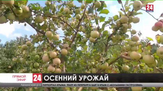 В Ленинском районе проходит уборка урожая
