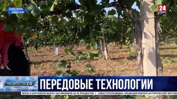 Как винодельни Севастополя увеличивают объёмы производства