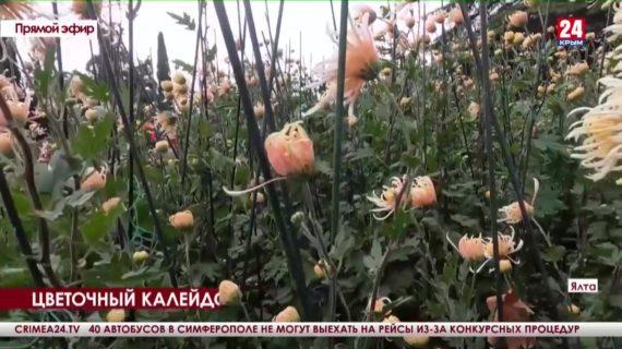 Новости Ялты. Выпуск от 27.10.21