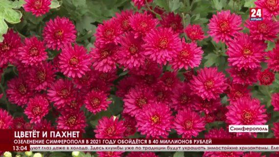 Розы, хризантемы, кусты можжевельника. Как озеленяют крымскую столицу?